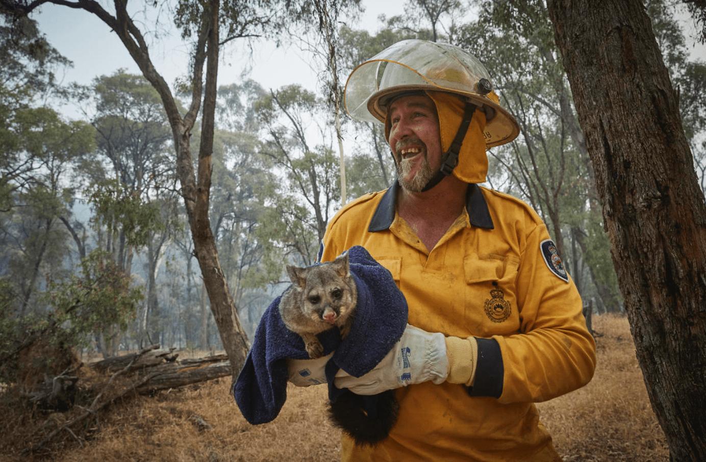 Pat Smith, een vrijwilliger bij de plattelandsbrandweer van Ariah Park, redt een 'possum' met brandwonden aan de rand van het kleine dorpje Tumbarumba in de Snowy Mountains in New South Wales.