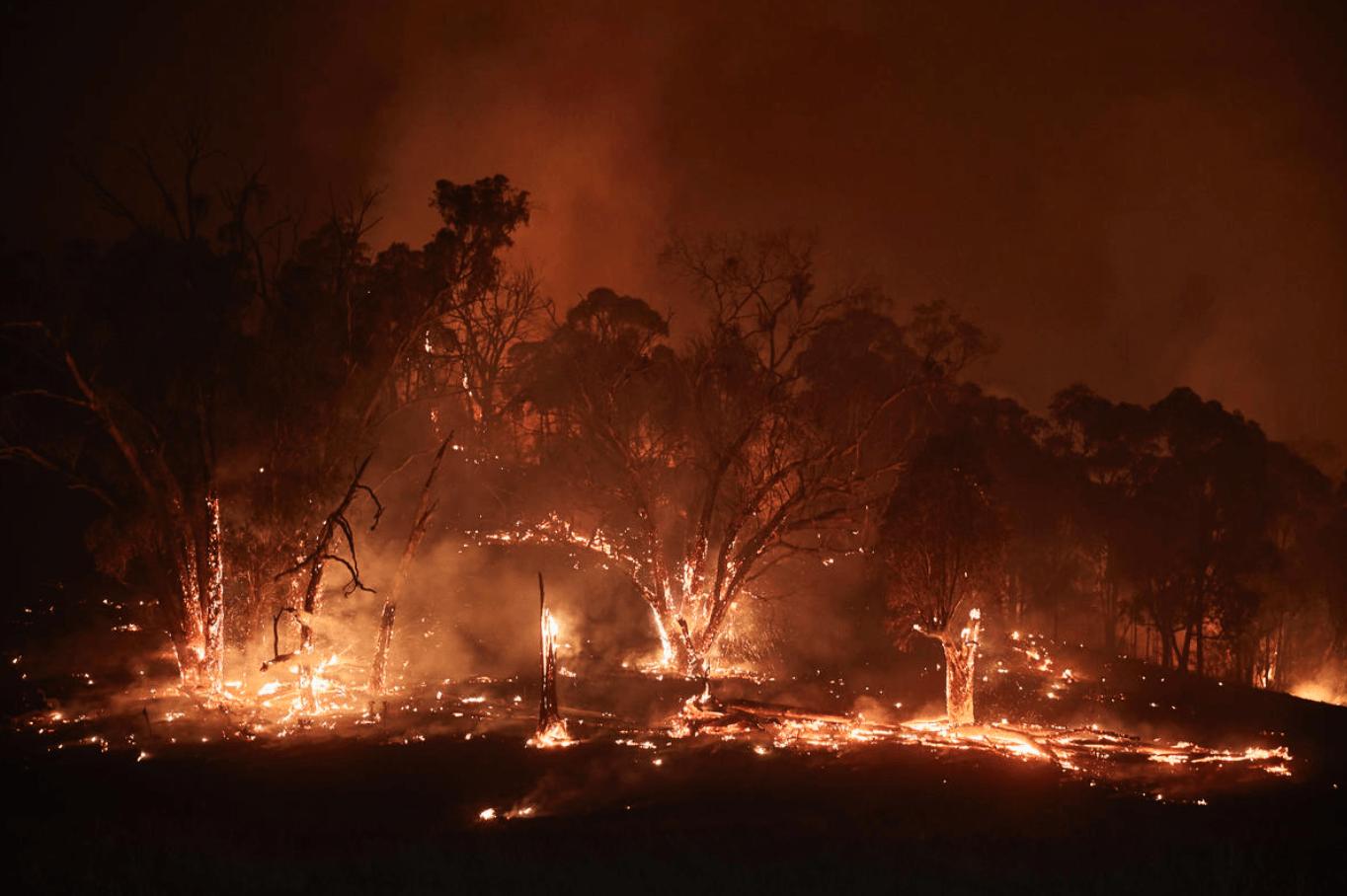 Bosbranden in New South Wales op 11 januari 2020.
