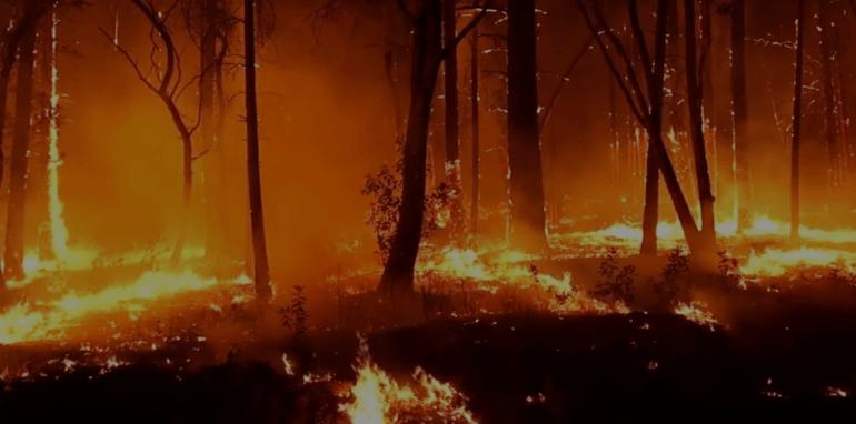 Bosbranden in Australië.