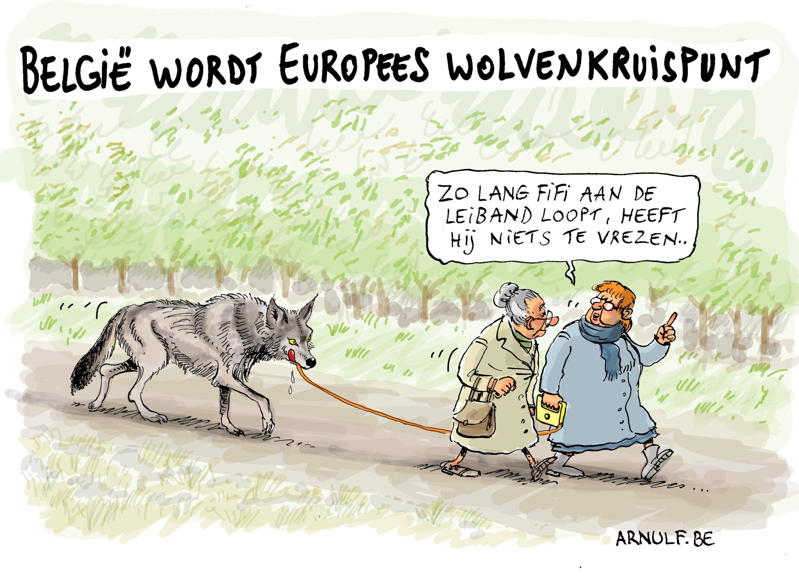 België wordt wolvenkruispunt