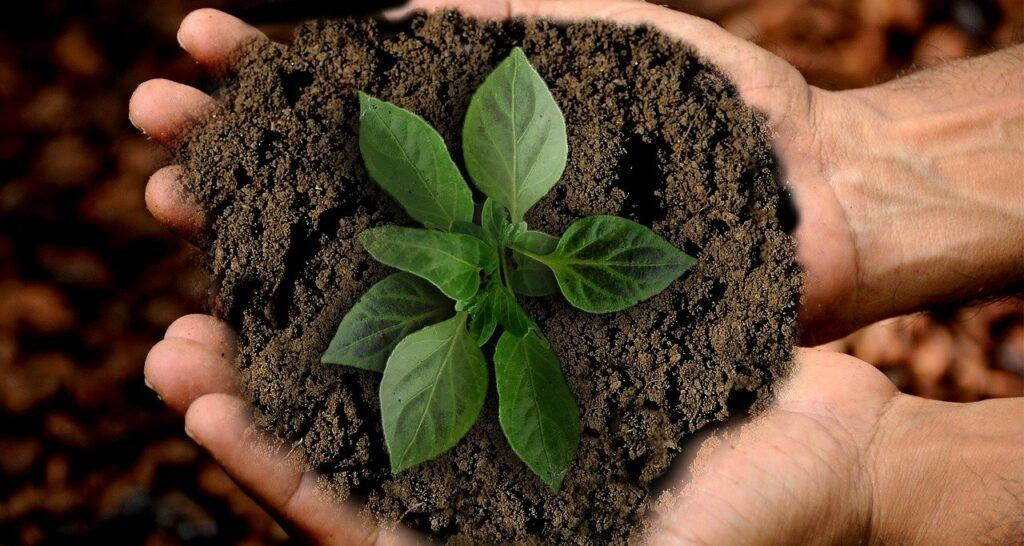 aarde met een plantje symboliseert duurzame groei